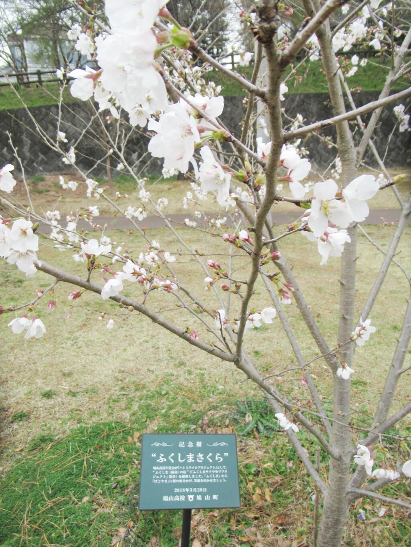 ハトミライ☆プロジェクト4